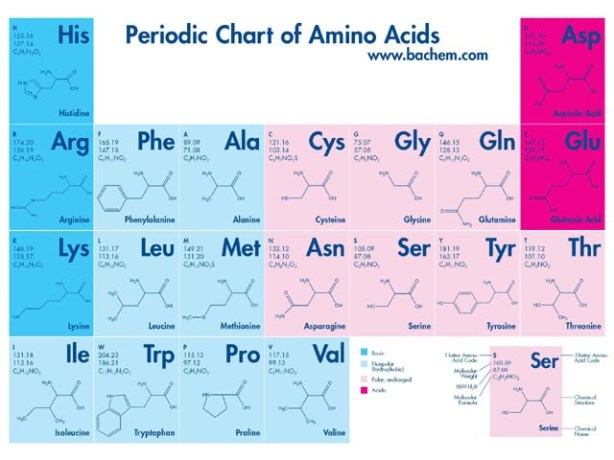 Periodic Chart Of Amino Acids | The Life And Times Of A U.W.I.